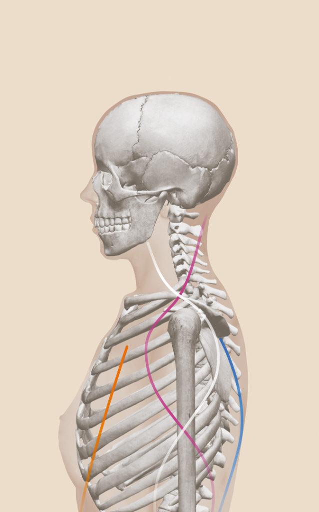 Gemütlich Muskeltest Anatomie Fotos - Menschliche Anatomie Bilder ...